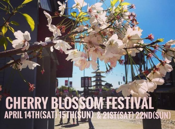 51st Northern California Cherry Blossom Festival